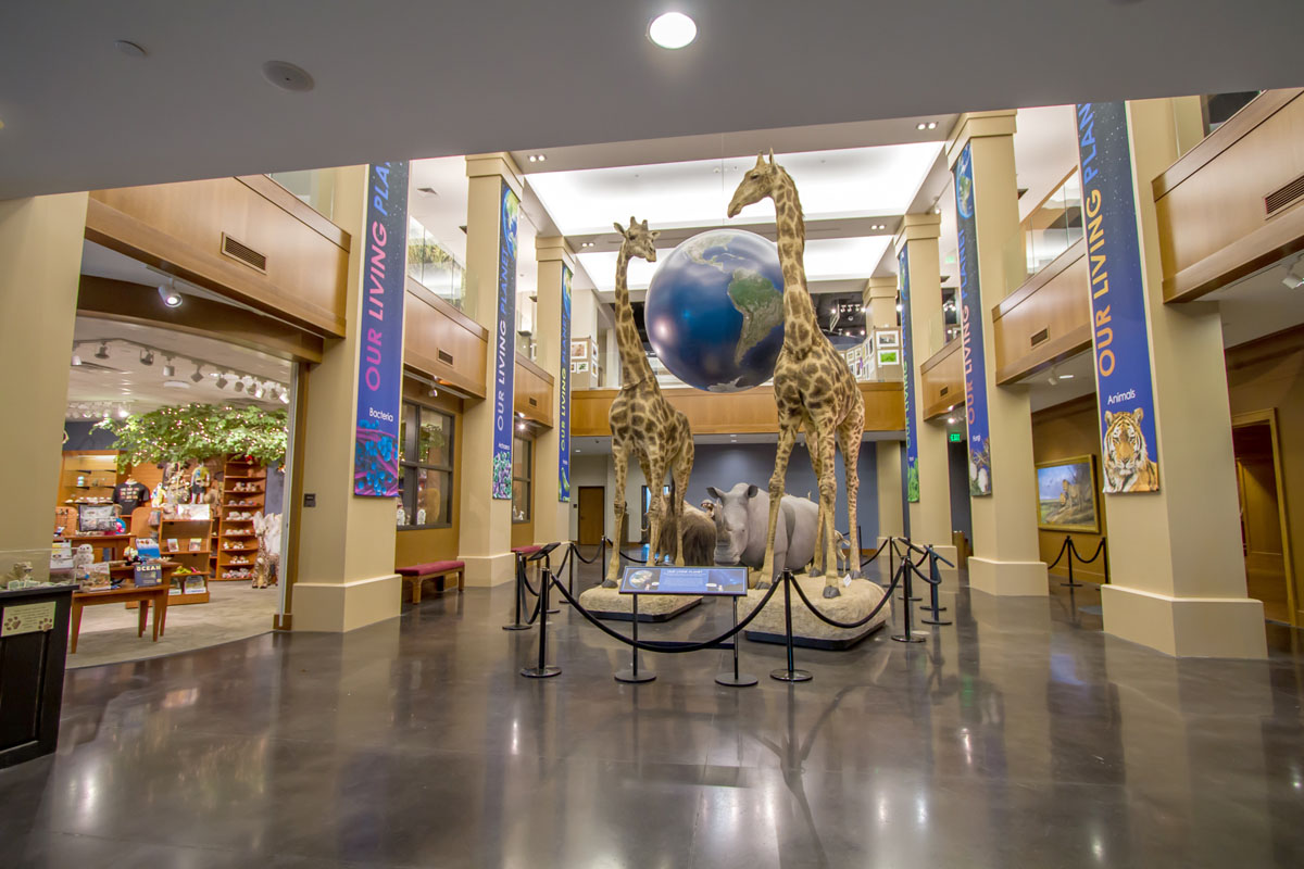 Bean-Life-Science-Museum-04