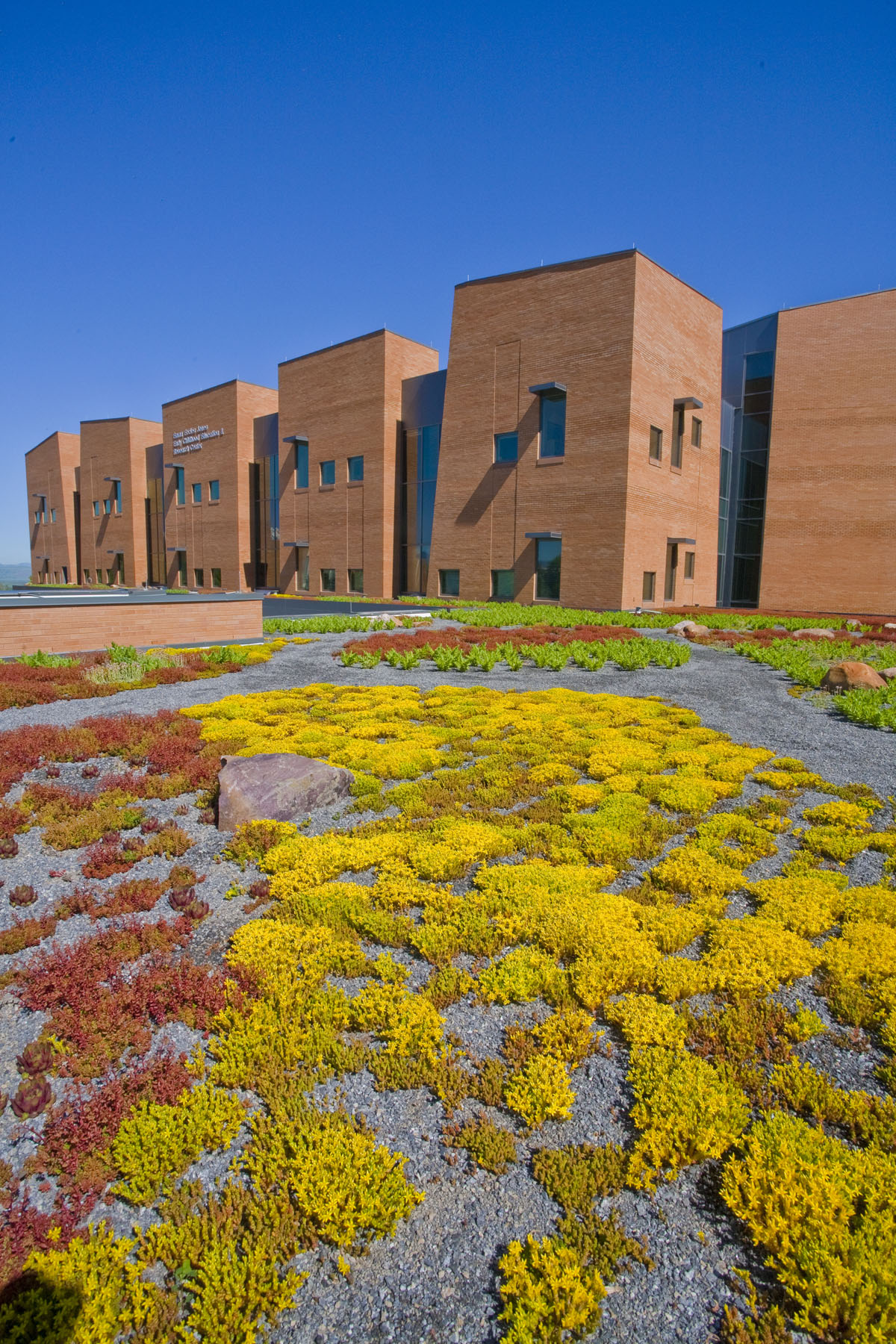 A closeup of the green roof system shows brightly colored plants in gravel at the early childhood education building.