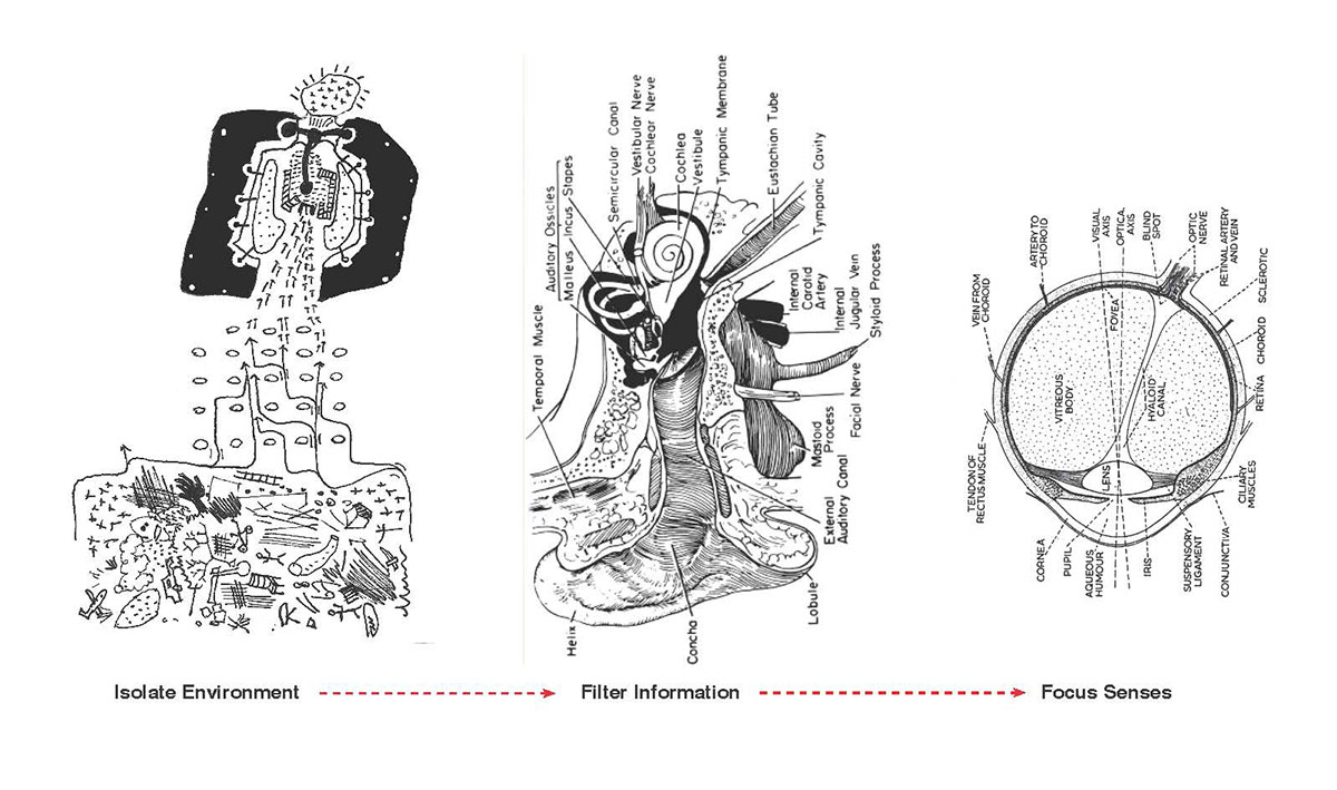A collage diagram of various parts of the ear.